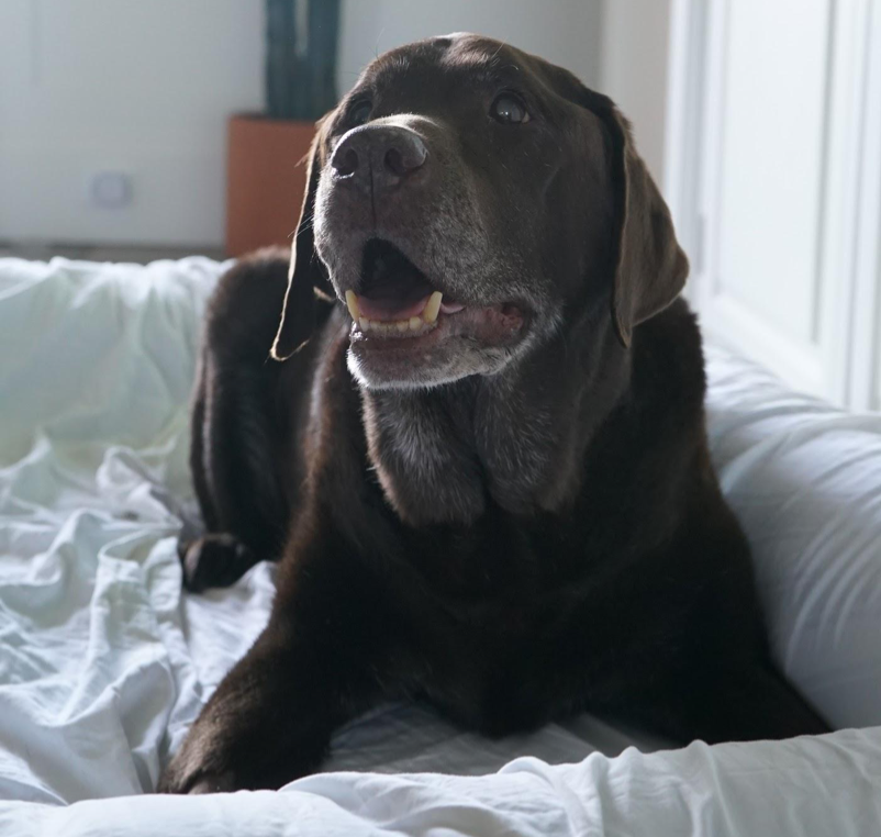 How to Keep an Old Dog Happy and Healthy