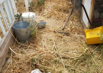 Dog Waste Removal in Paso Robles, Ca