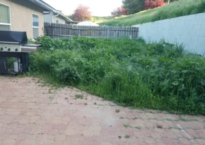 Overgrown Yard Cleanup Service in Santa Maria, Ca