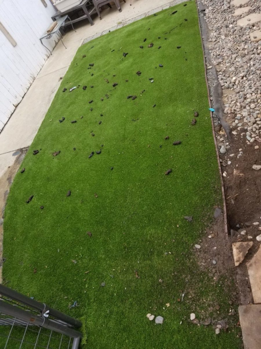 Dog Waste Removal in Santa Maria, Ca